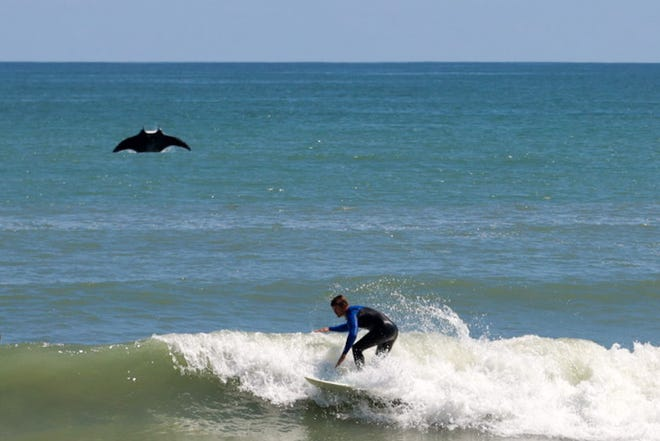 Rusty Escandell captured a ray leaping from the ocean on March 14, 2021 off of Satellite Beach.