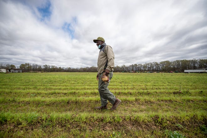 Calvin Head, of the Mileston Co-op in Tchula, walks through one of the largest farms that grows leafy greens near Tchula, Miss., Thursday, March 18, 2021. According to Head, farmers only received 20 cents per pound for these crops instead of the usual 70 to 80 cents.