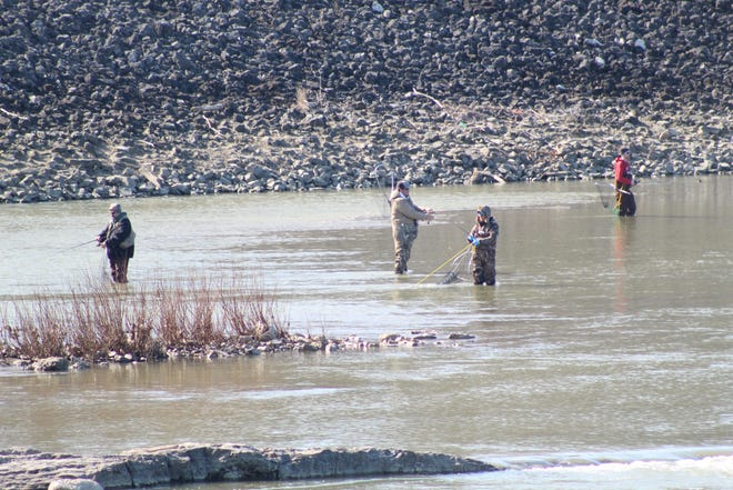 Anglers fan out on the Sandusky River hoping to catch walleye.