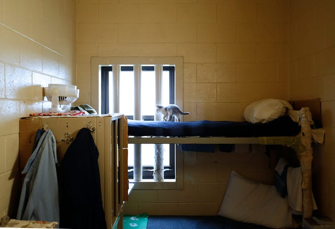 Two inmates at the Madison Correctional Institution allege abuse by corrections officers, with Ohio Supreme Court Chief Justice Maureen O'Connor requesting an investigation. The prison has a program in which some inmates raise kittens for the Madison County Humane Society.