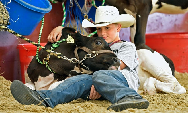 Corben Sherrard, 9, of Venice, relaxes with Roxsy before the dairy cattle show March 19 at the Sarasota County Fair.