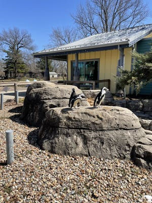 The Earth Awareness Fair will be held at the Henson Robinson Zoo from 11 a.m. to 4 p.m. Saturday.