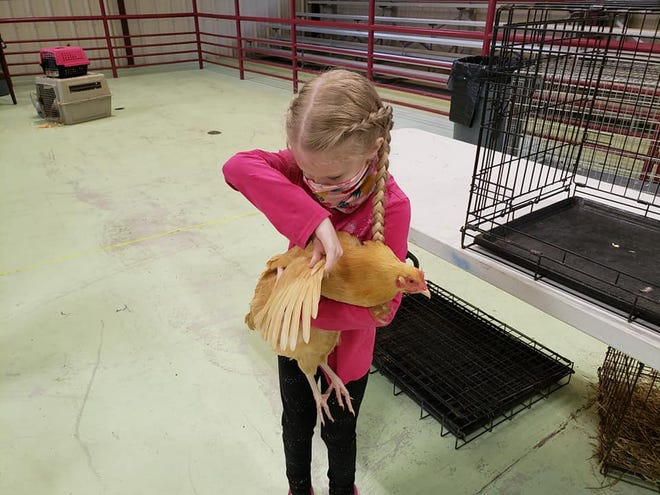 Youth learned and practiced showmanship skills at a Wakulla 4-H Poultry Science Workshop earlier in 2021.