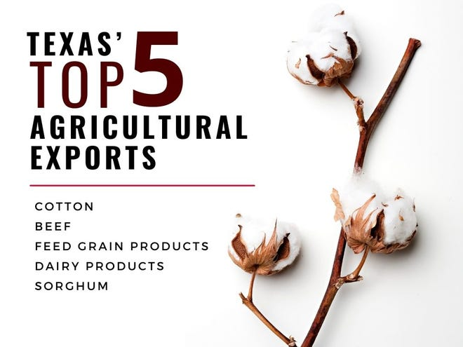 The top agricultural exports from the state of Texas are cotton, beef, feed grain products, dairy products and sorghum.
