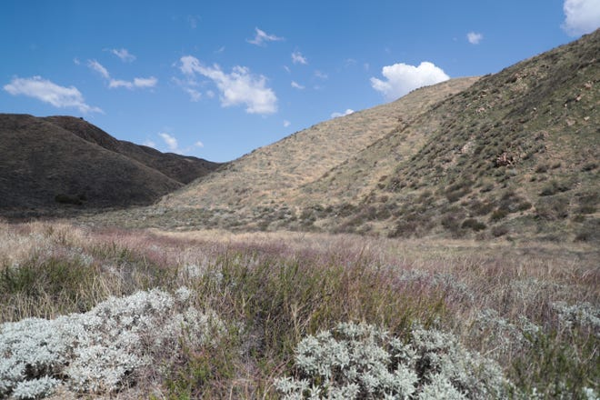 Walker Canyon, a popular destination for wildflower enthusiasts to view poppy flowers, sits empty of blooms on Sunday, March 21, 2021, in Lake Elsinore, Calif.