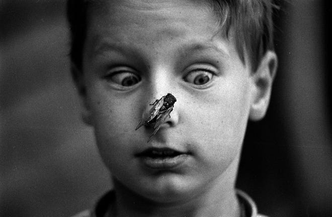 Tim Wangler, 8, gets a close look at a cicada June 11, 1990, in Elmhurst.
