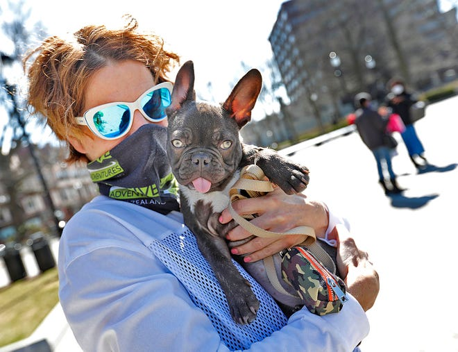 """Elke Hosemann of Quincy with her four month old French bulldog """"Cooper"""" in Quincy Center."""
