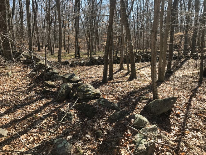 Stone walls constructed by early settlers are visible in the woods throughout the Burlingame North area.