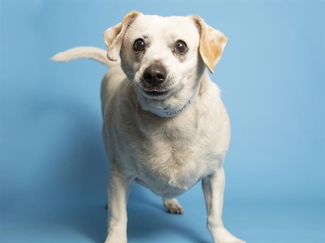Interested adopters can view available pets, like Tobbey, and schedule an appointment online at azhumane.org/adopt.