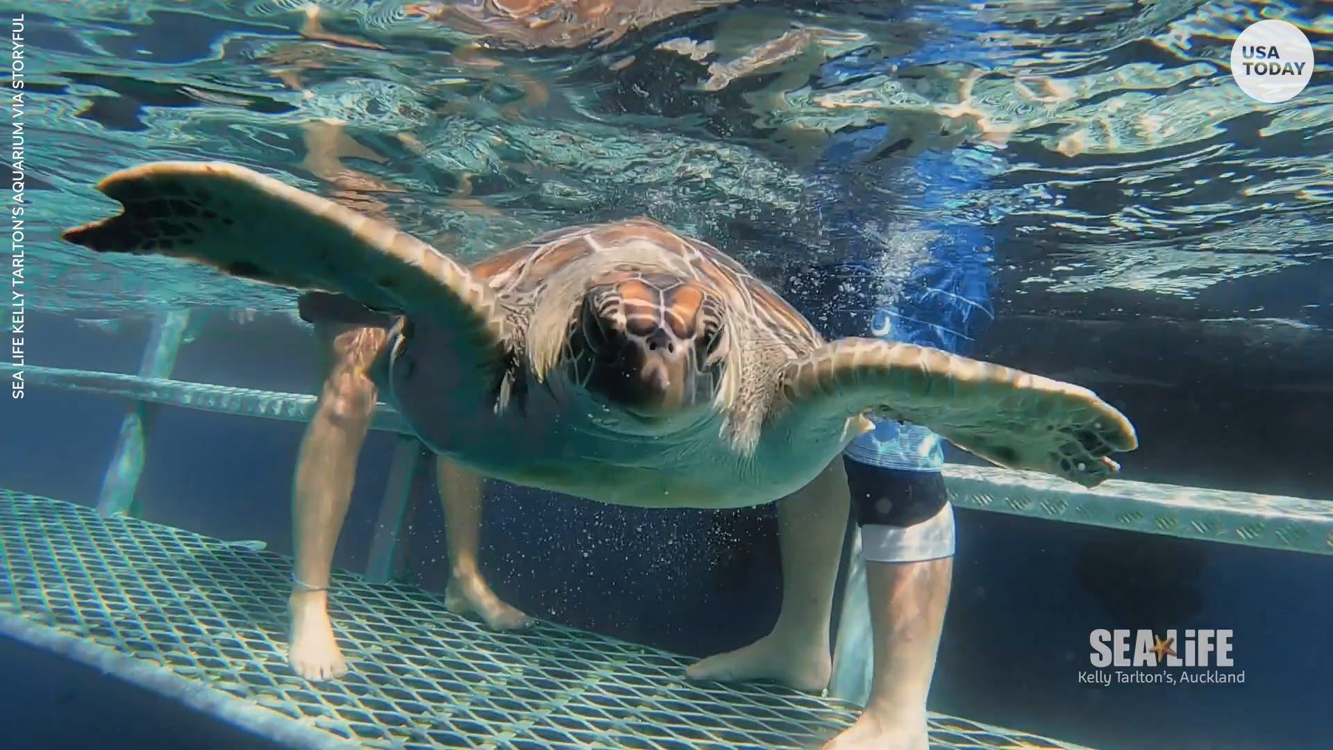 Watch these rescued sea turtles go back home to the ocean