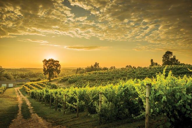 Sunset at Ciccone Vineyard & Winery on Michigan's Leelanau Peninsula