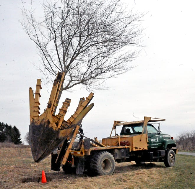 A hawthorn tree goes into its new home at Oak Hill Park in Wooster. The tree is part of a memorial grove created by Wooster Rotary to celebrate 100 years as an organization. Davey Tree Nursery is moving 27 trees from Secrest Arboretum for the memorial grove.