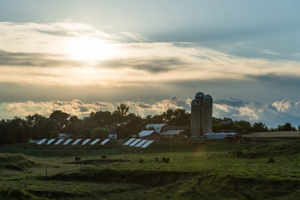 A Wisconsin Organic Valley member farm with solar panels installed.