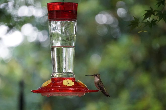 It's time to get those hummingbird feeders ready for spring.