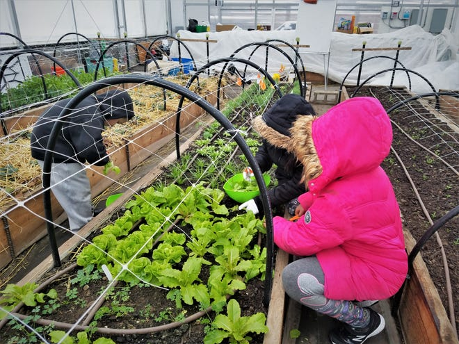 Youth living in Hilltop neighborhoods learn how to garden year-round at the Highland Youth Garden.