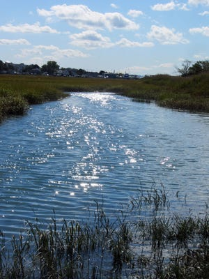 Belle Marsh is the last salt water marsh in Boston. It's home to many species of birds and animals.