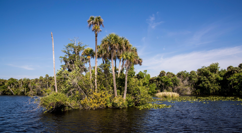 Washing away: As Caloosahatchee's remaining oxbow islands erode, Lee commissioner seeks help 1