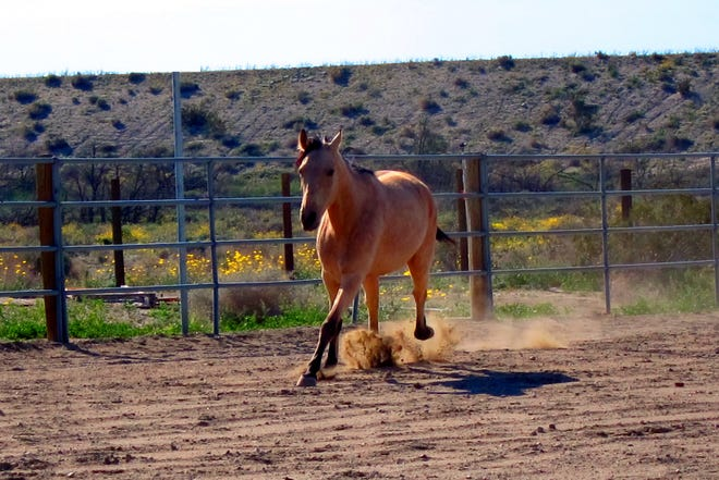 In addition to rescuing abused horses, Coachella Valley Horse Rescue strives to enhance the quality of life for children and adults by providing equine-assisted programs.