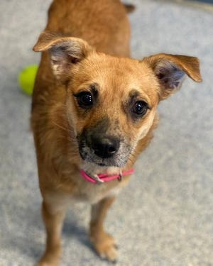 Lucy is up for adoption at ARF.
