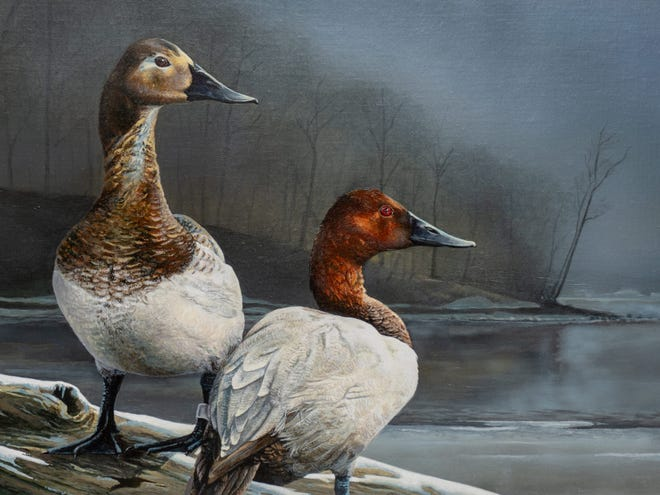 A painting of canvasback ducks by Sean Johnson of Louisville, Ohio, won this year's Ohio Wetlands Habitat Stamp Design Competition.