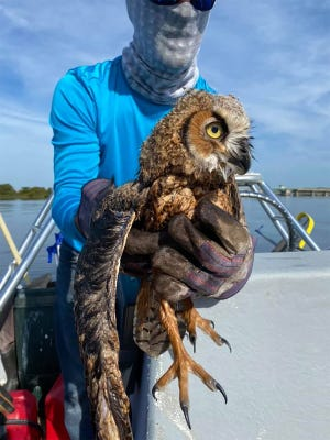 """Adam Morley holds """"Jonah,"""" a baby owl he found floating in the Matanzas River, by State Road 206 bridge south of St. Augustine recently."""