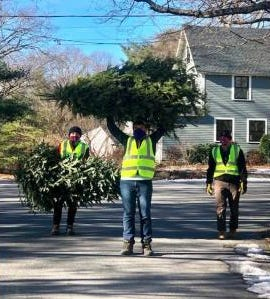 Scout Troop 132 assisting the Christmas tree pickup