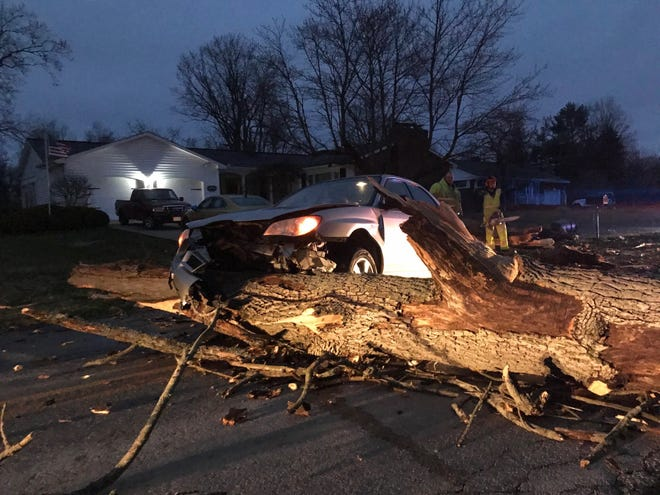 A motorist struck a downed tree Friday morning on Myers Road near Shelby. The driver was not injured, according to the Mansfield post of the Ohio Highway Patrol.