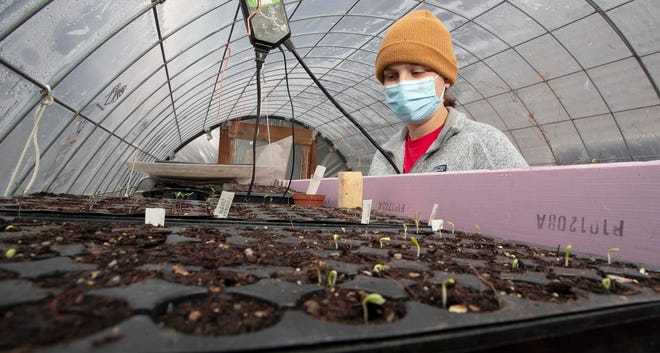 Sam Laswell, of Sheboygan, looks over the start of her plants in her green house,, Thursday, March 25, 2021, in Sheboygan, Wis.