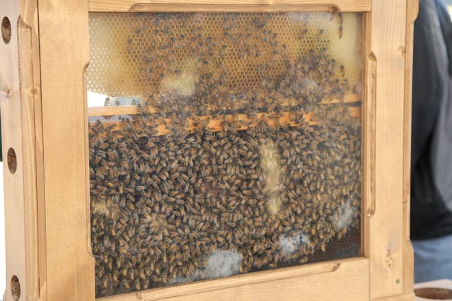 Learn from a local apiarist (beekeeper) how to raise a happy, healthy beehive at the Sustainable Community Summit will be hosted April 6-10, 2021.