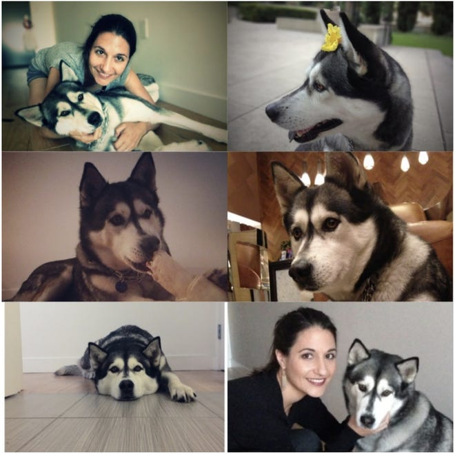 Aitana Vargas of Los Angeles claims in a federal lawsuit that her 10-year-old Siberian Husky named Lolita developed a cancerous lump on the neck after wearing a Seresto flea and tick collar.