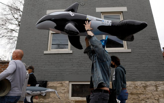 """German Village resident Jeff Tobin carries an inflatable whale down South Third Street during a """"whale walk"""" to oppose the 262-unit apartment complex proposed for the Giant Eagle site at 280 East Whittier St. near German Village."""