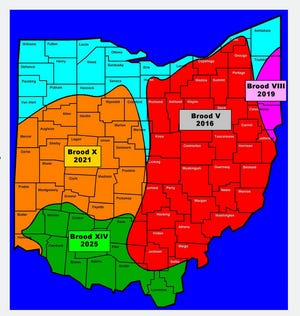 This periodical cicada brood map shows where 17-year cicadas have or will be emerging in Ohio.
