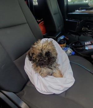 Florida Highway Patrol troopers rescued this puppy at the scene of a crash on northbound Interstate 95 near Ormond Beach where a van rolled over, its roof ripping open, and killing 3 of 11 occupants in the vehicle, FHP's Lt. Kim Montes said.
