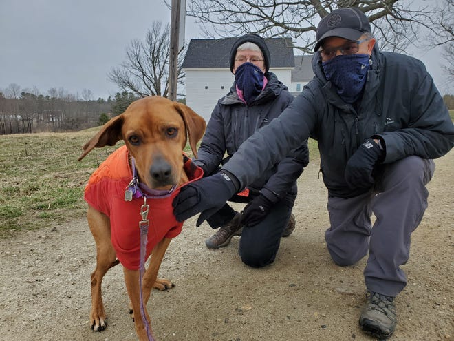 Zola, a 4-year-old Rhodesian Ridgeback is itching to go for a walk with her owners, Lyn Howard and Mary Alice Schatzle of Durham. Howard is an administrator of the Facebook group Seacoast DOG, whose members use Wagon Hill Farm to exercise themselves and their dogs.