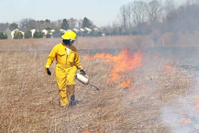 Prescribed burns are conducted by conservation specialists with a specific goal such as reducing invasive species, limiting future fire severity, or preventing prairie or savanna habitat loss.