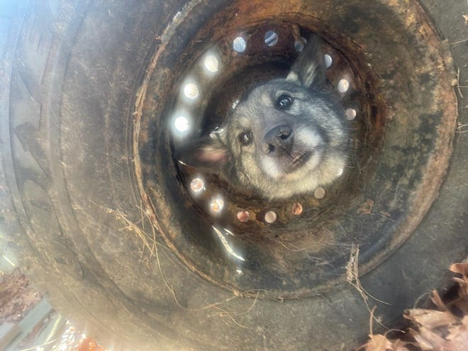 Fire and animal control officials in Falmouth freed a dog, Bella, who got her head stuck in a tire rim Saturday. The dog was not injured. [Photo courtesy Falmouth Fire Department]