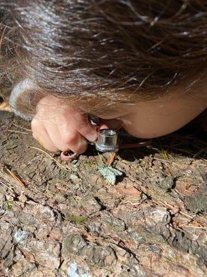 Sammy, Nature News columnist Susan Pike's cousin, inspects the joker moth she found.