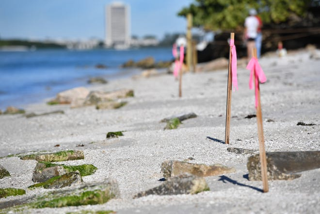 A Siesta Key property owner erected stakes to discourage people from walking on the beach in front of his house.