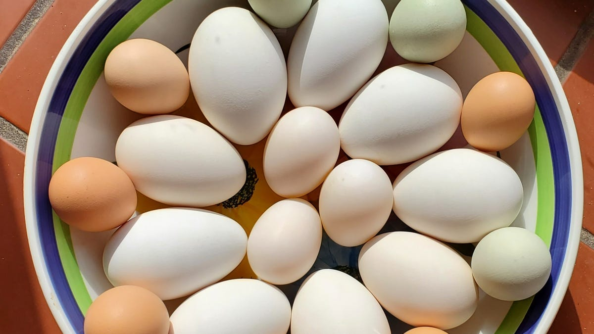 Egged on: Here's what to do with Easter eggs 2
