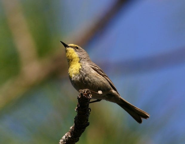 Spring migration of bird species is already well underway, beginning in mid-to-late February and lasting through May.