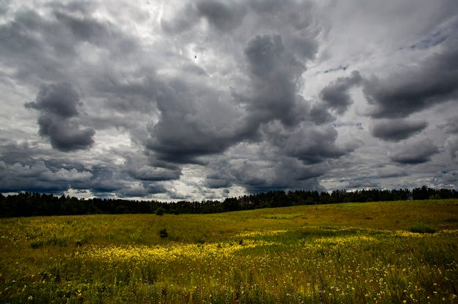 A thunderstorm on the horizon will bring much needed rain to help freshen the soil.