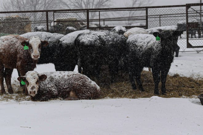 Farmers and ranchers have until April 2, 2021, to apply for assistance from the USDA Natural Resources Conservation Service (NRCS) in response to the winter storms that hit Texas in February.