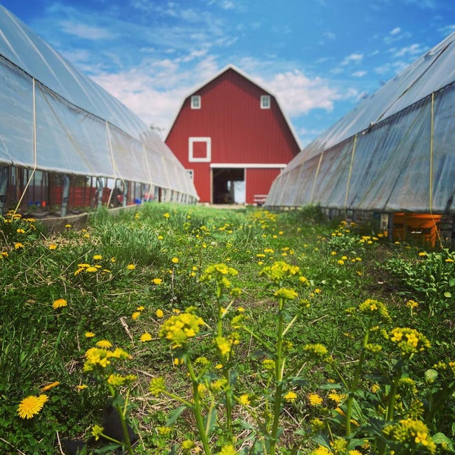 Rinehart's Family Farm will be hosting an Easter-themed drive-thru market on Saturday from 8 a.m. to noon.