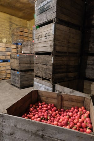 Apples inside the cold storage room at Kapnick Orchards in Britton.