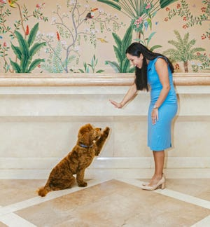 Australian Labradoodle therapy dog Fort high-fives with Cristina Tosti, a Four Seasons sales coordinator.