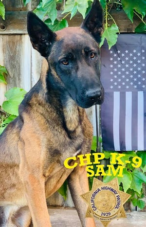 Sam, the K-9 officer with the California Highway Patrol Inland Division, is recovering after the dog was allegedly stabbed Monday by a fleeing suspect  near the Cajon Pass.