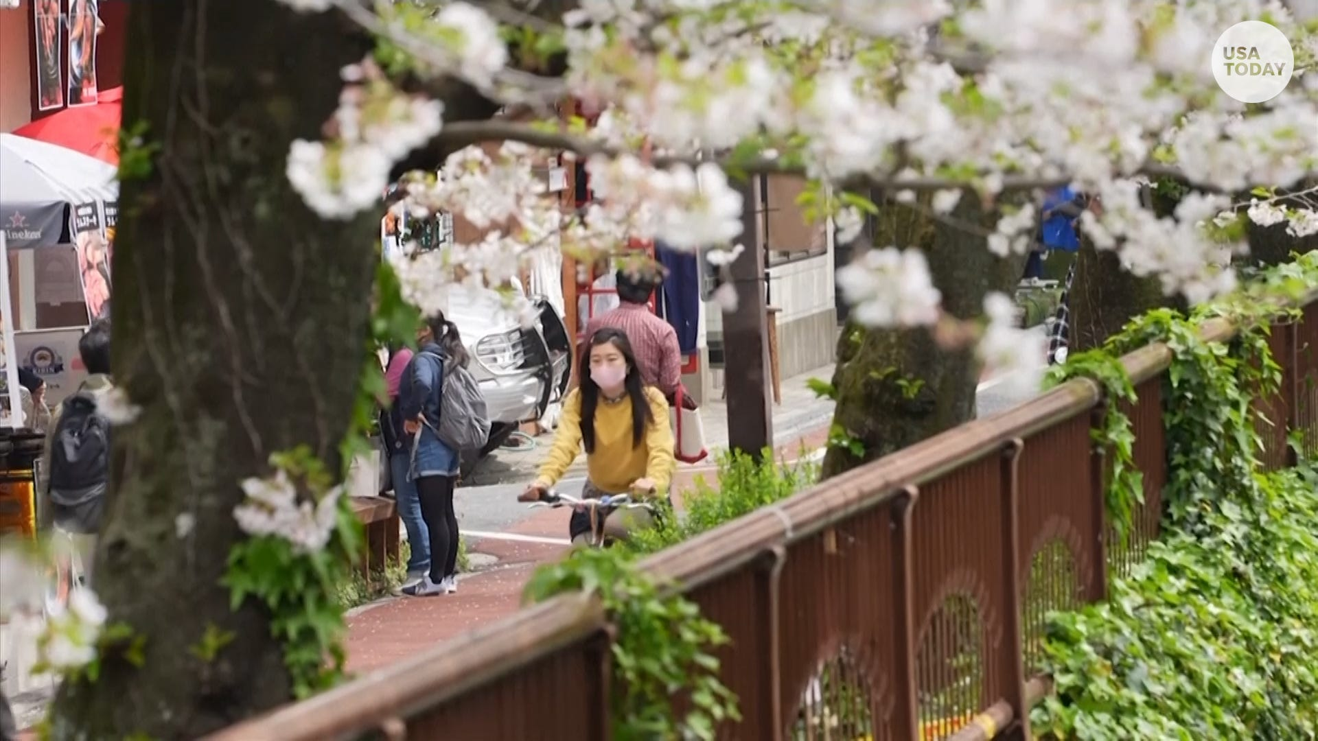 Tokyo rings in spring with cherry blossoms in full bloom