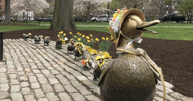 Ducked out in the Boston Public Gardens.