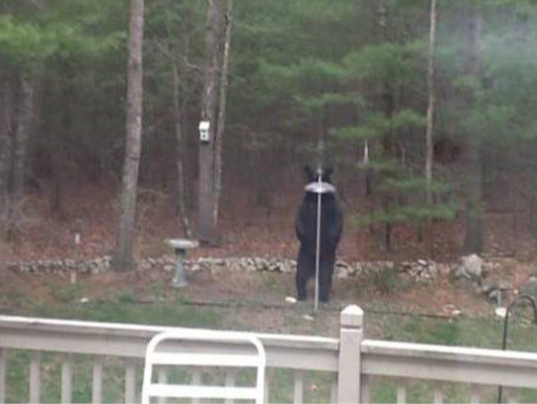 A black bear checks out a bird feeder.