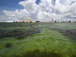 Sewage could fuel algae blooms on Florida coast